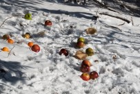apples for the deer -- people are kind