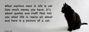 what-matters-most-in-life-is-not-how-much-money-you-have-its-about-quotes-and-stuff-that-tell-you-what-life-is-really-all-about-and-here-is-a-picture-of-a-cat