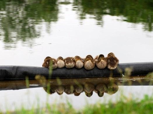 duckslinedup(2)