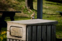Squirrel, sitting still for several seconds!