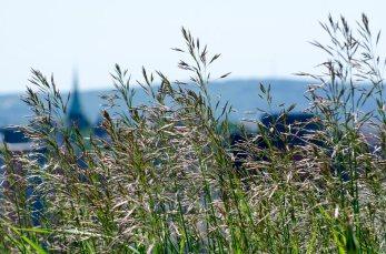 Some grass